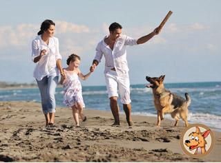 Tierversicherungen für Hunde