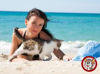 Tierversicherungen für Katzen