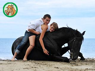 Pferd und Reiter sicher plus