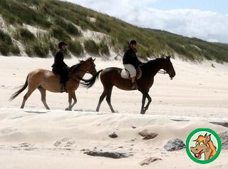 Tierversicherungen für Pferde